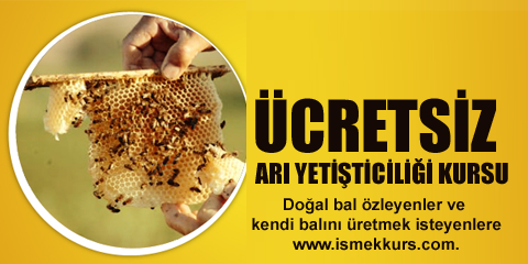 Arı Yetiştiriciliği Kursu